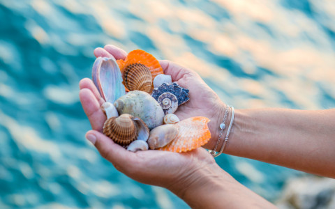 woman holding seashells