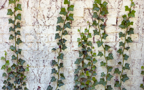 wall with vines