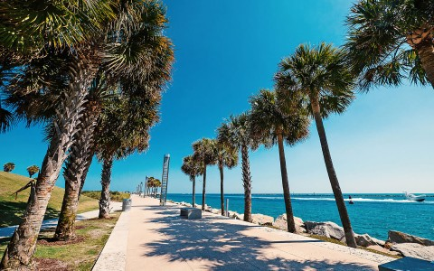 Sidewalk surrounded by palm trees by the water