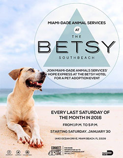 miami-dade animal services at the Betsy