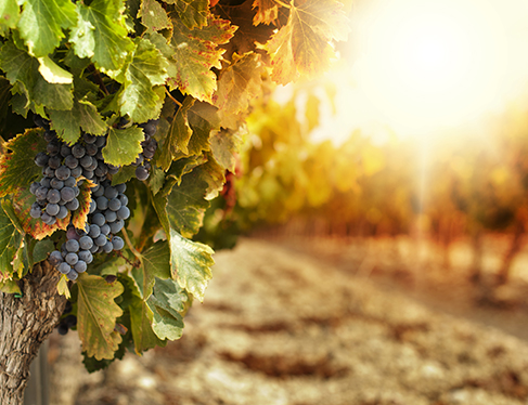 Wine Country Fall Harvest Getaway Package
