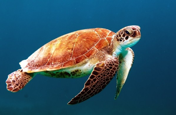 Turtle Release Tour: Help Protect a Vulnerable Animal Population