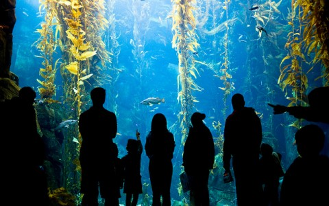 The Kelp Forest at California Science Center