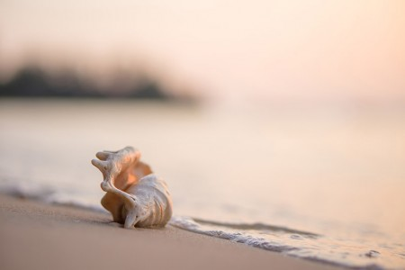 Beautiful Beachcombing