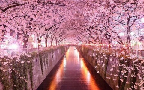 Celebrate Spring With the Annual Cherry Blossom Festival