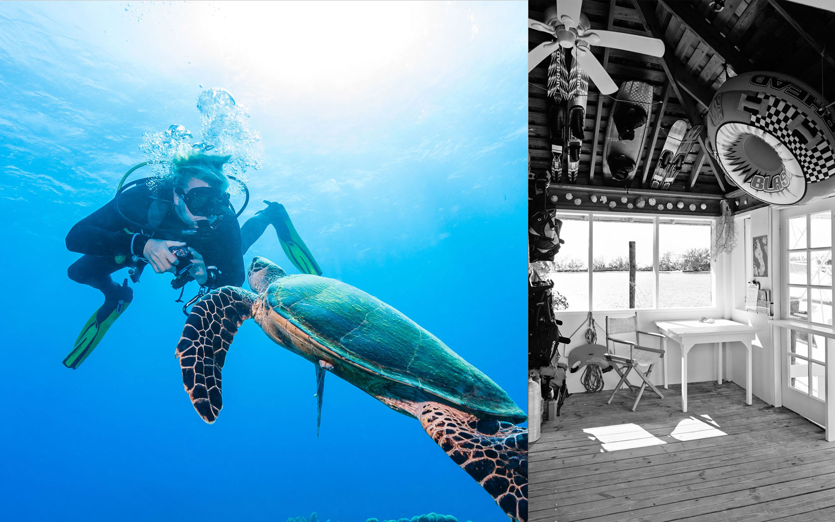 Kamalame-Home-Turtle-Dive-Shop.jpg