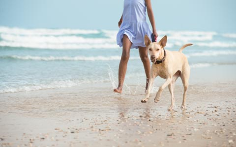 woman walking on the sand at the beach with a dog running by her side
