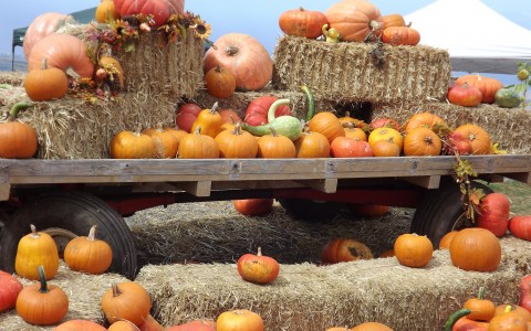 This Year, Pick Your Pumpkins with a Purpose
