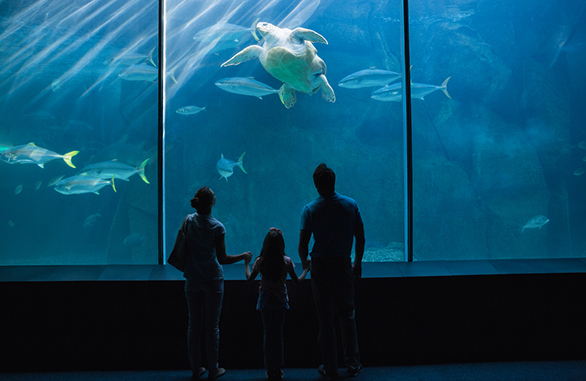 Monterey Bay Aquarium Family Package