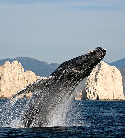 Whale Watching Image