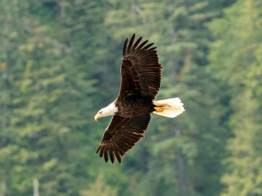 Bald Eagle Viewing