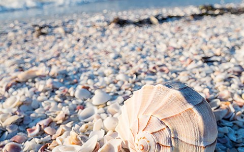 Sanibel's Best Shells