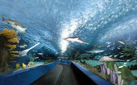 Swim over to Ripley's Aquarium