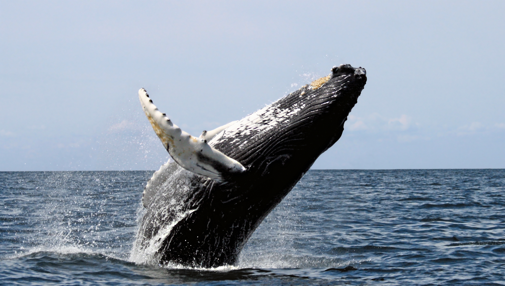 Take a Whale-Watching Tour