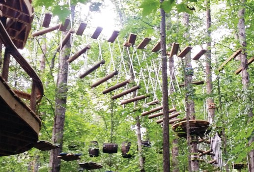 Navitat Knoxville: An Adventure in the Trees