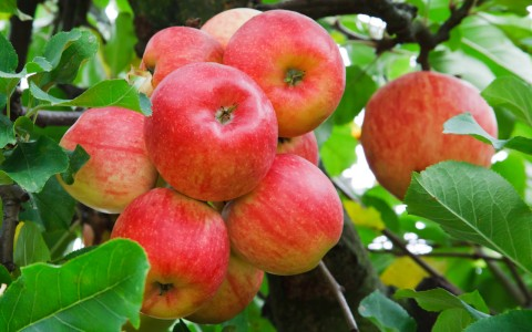 Celebrate National Apple Month at Clearview Organic Orchards