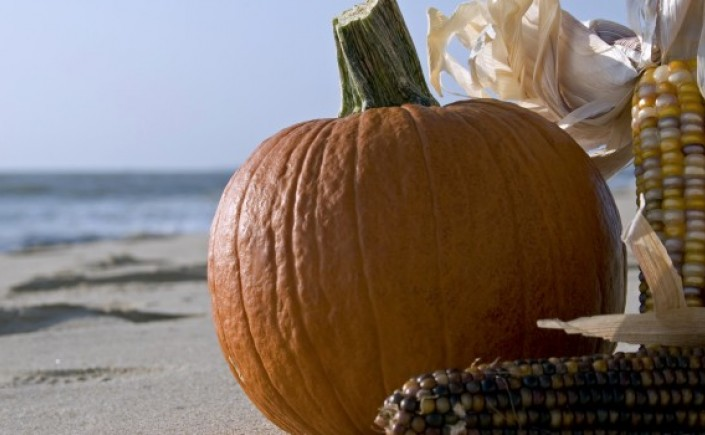 Close up of a pumpkin and corn husk on the beach