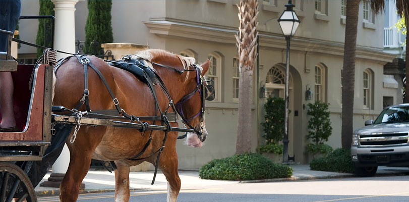 Horse-drawn Carriage Tours  1