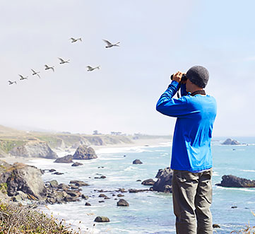 The Birds of Bodega Bay Package